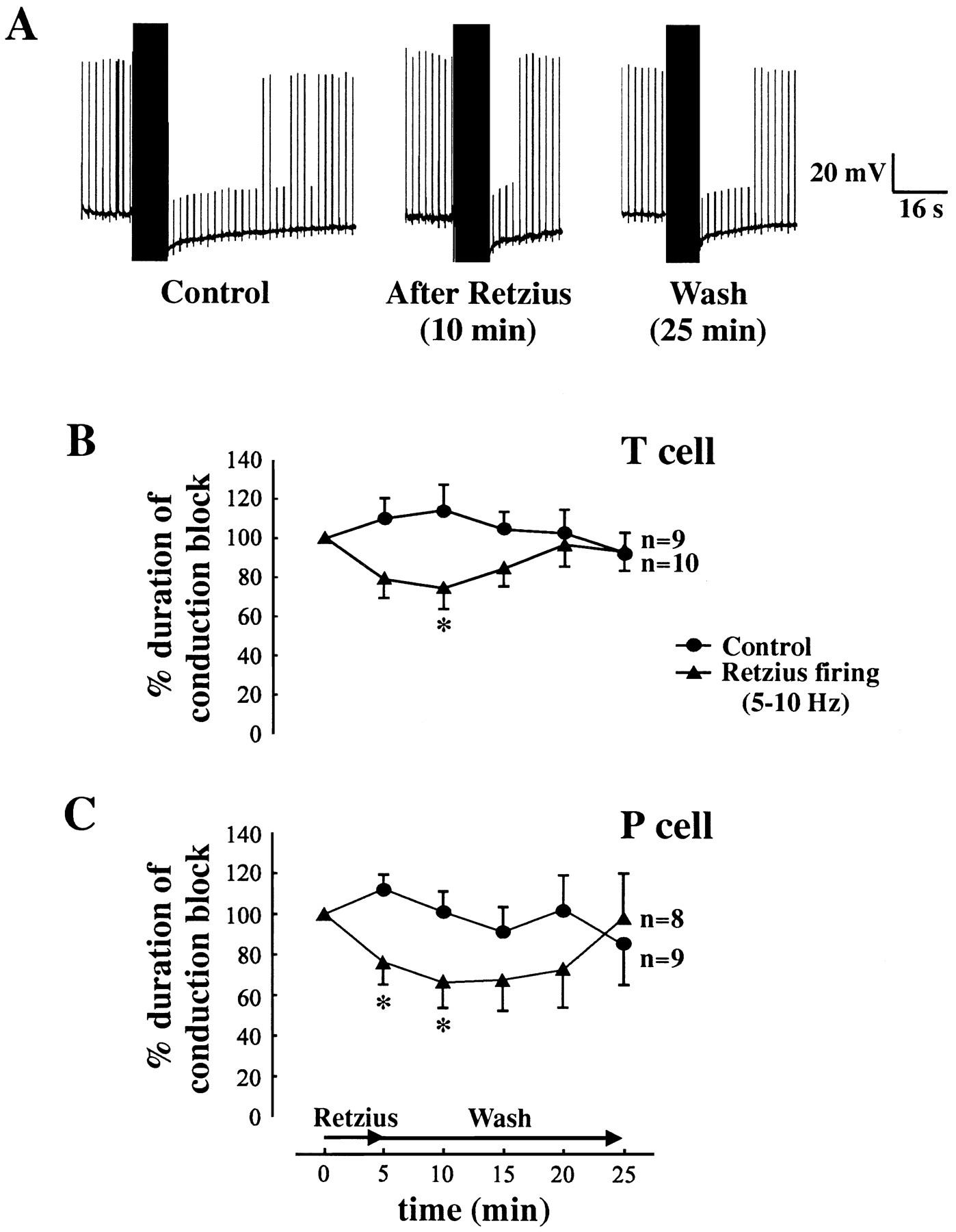 Modulation Of Conduction Block In Leech Mechanosensory Neurons Home Attwood Trailer Light Circuit Tester Download Figure
