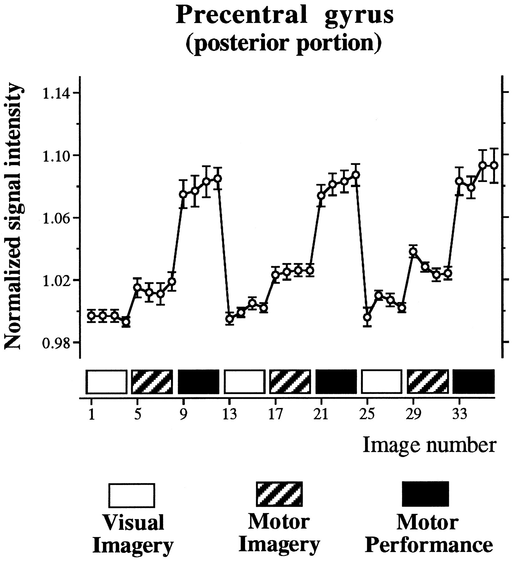 Primary Motor And Sensory Cortex Activation During Motor Performance