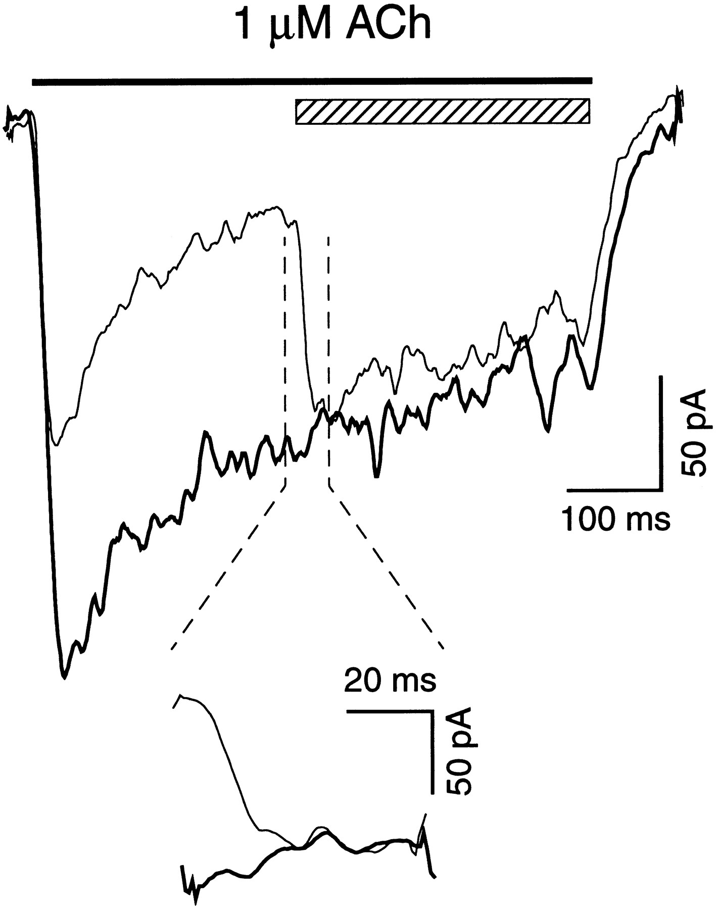 human 4 2 neuronal nicotinic acetylcholine receptor in hek 293 Acid in Chemistry Diagrams download figure