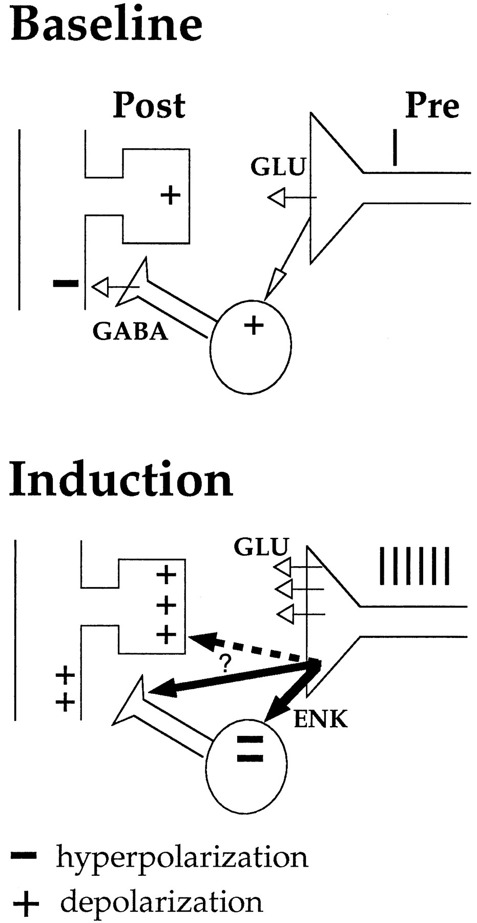 Endogenous Activation Of And 1 Opioid Receptors Is Required For Disposal Diagram Double Sink Free Download Wiring Schematic Figure Open In New Tab Powerpoint
