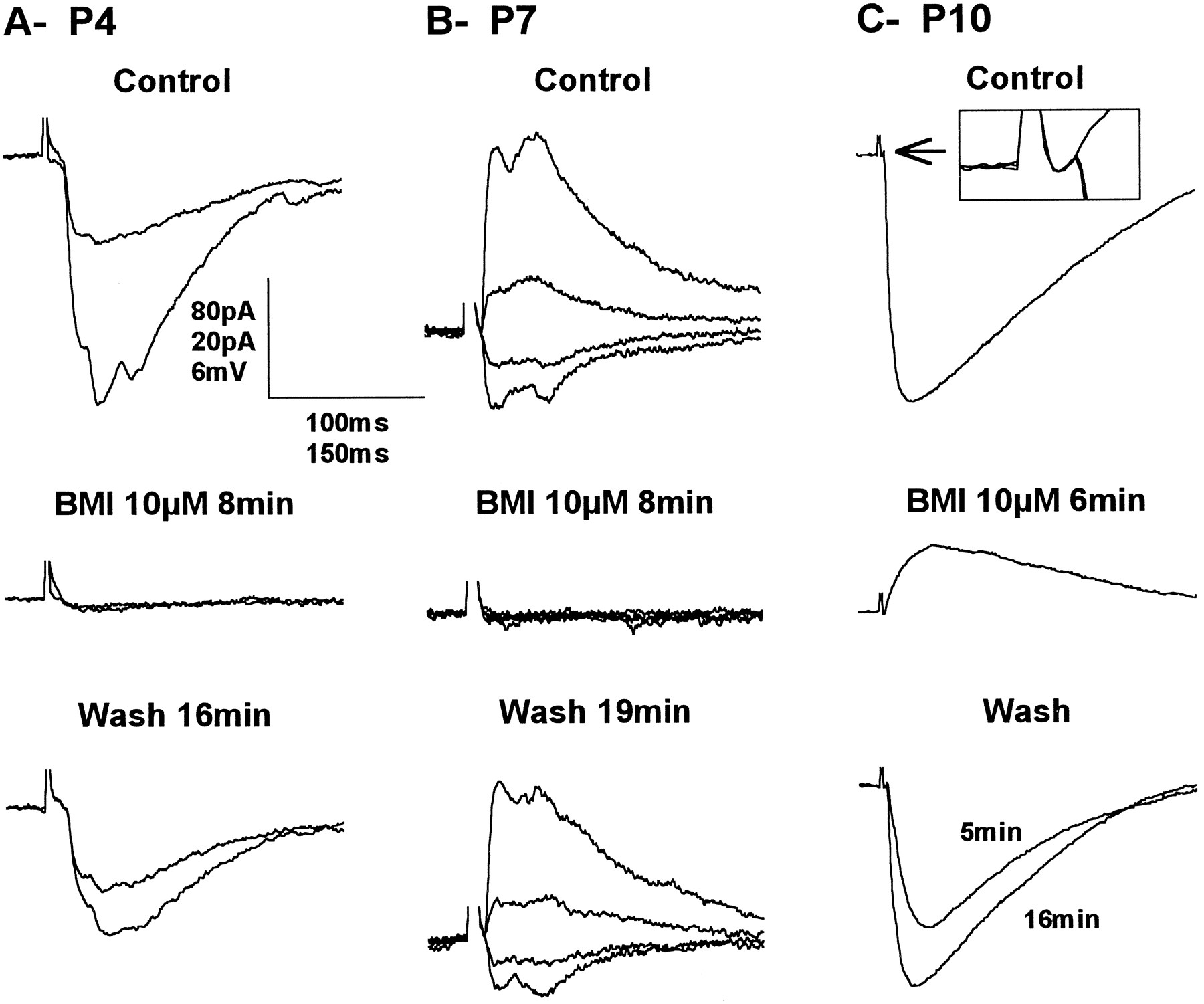 Maturation Of Neuronal Form And Function In A Mouse Thalamo Cortical 1996 B100 Fuse Box Diagram Download Figure