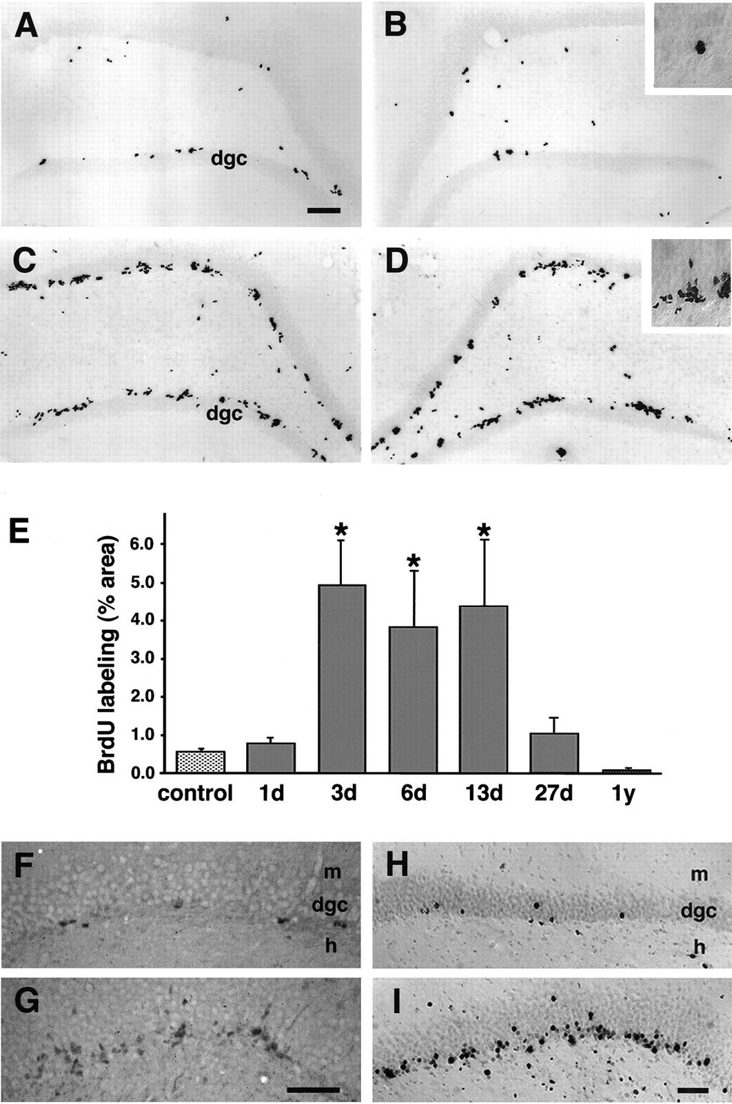 Dentate Granule Cell Neurogenesis Is Increased By Seizures And
