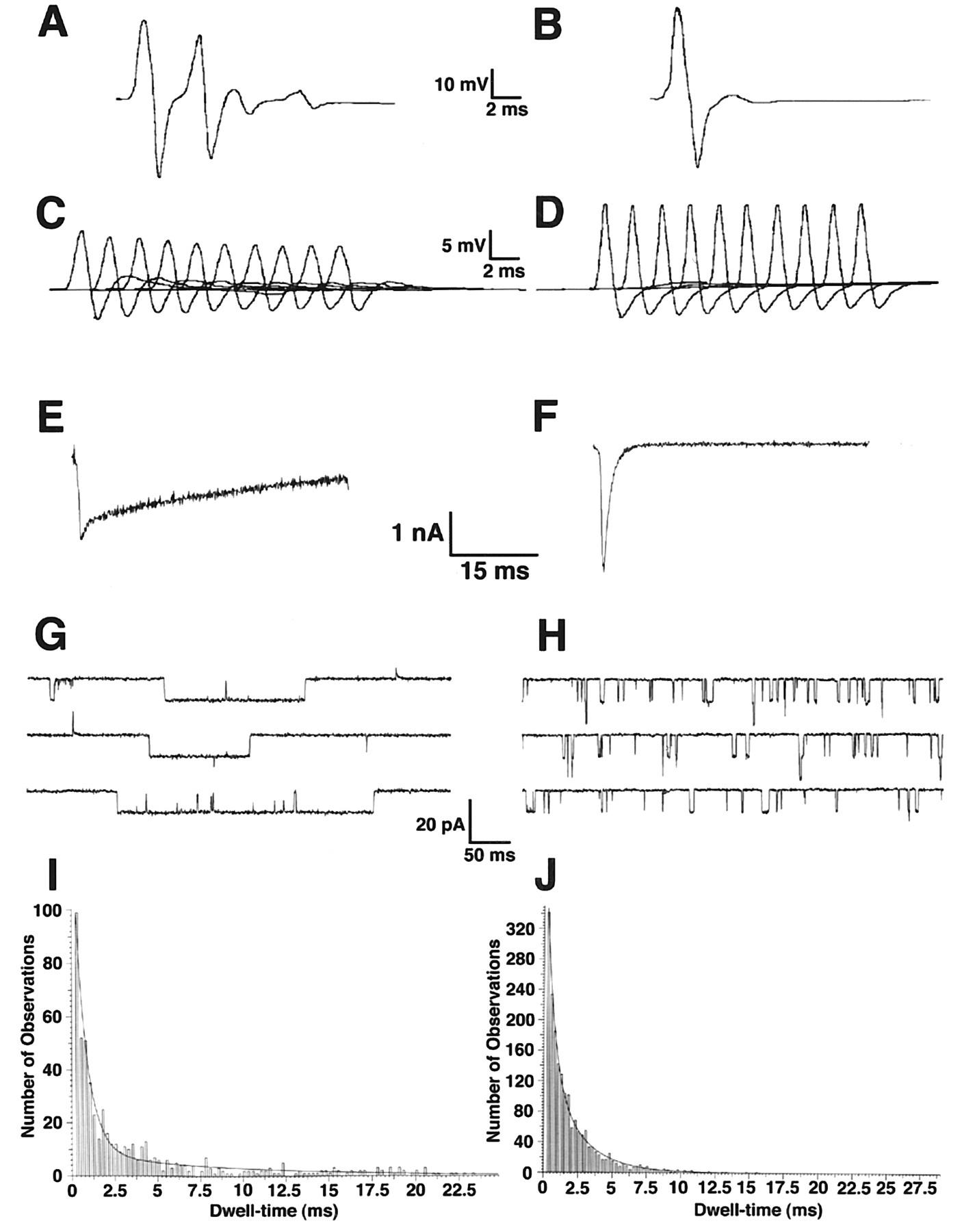 SlowChannel Transgenic Mice A Model of Postsynaptic Organellar