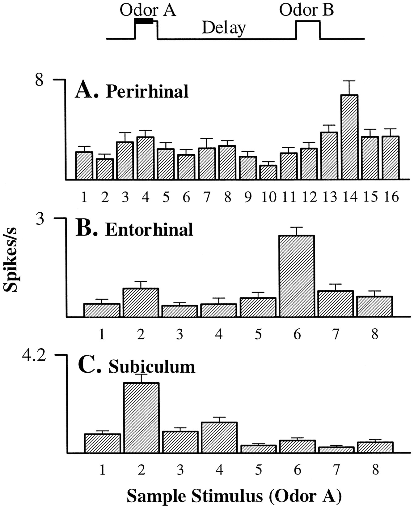 Memory Representation Within The Parahippocampal Region Journal Of