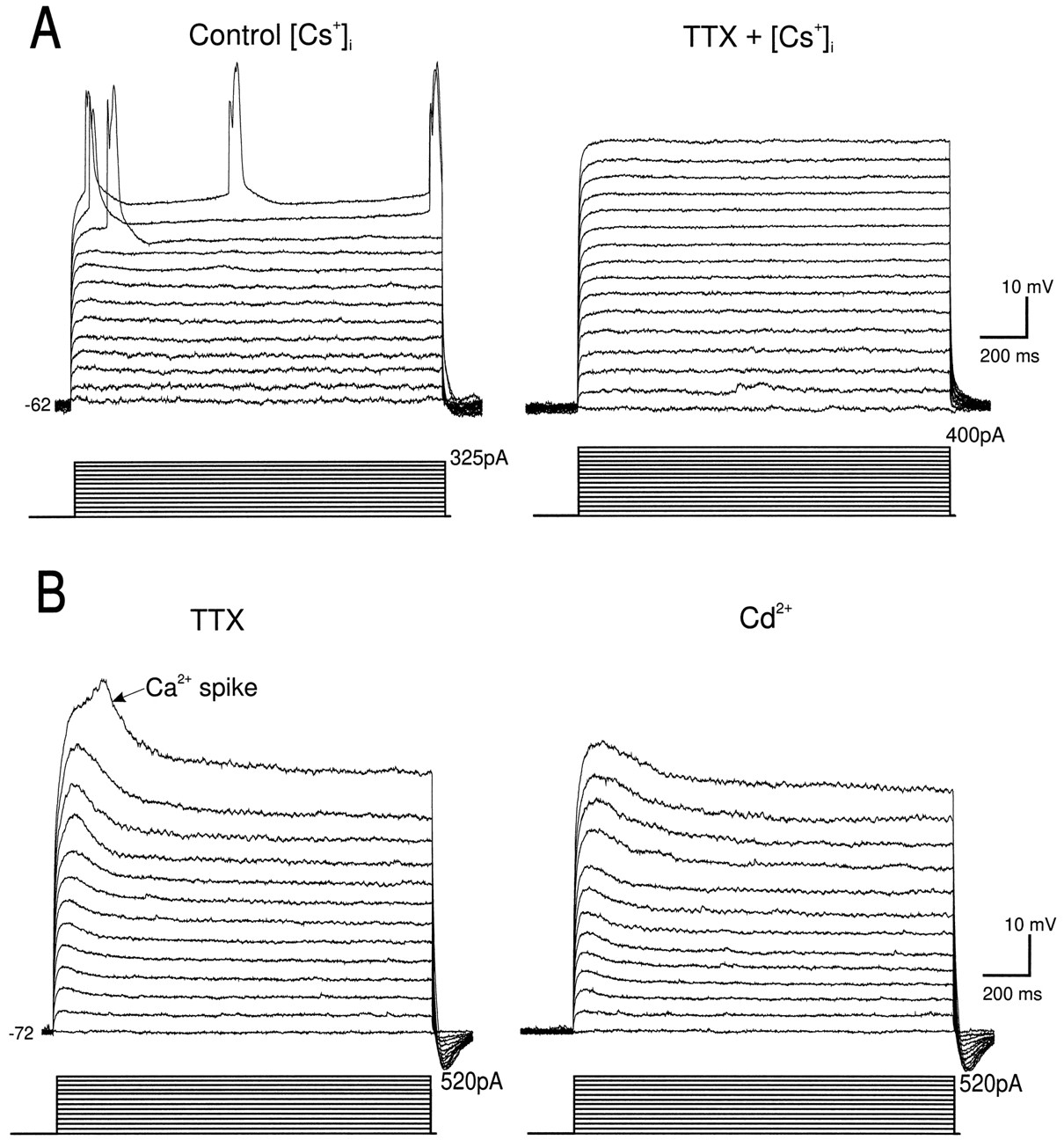 Contributions of Voltage-Gated Ca2+ Channels in the Proximal versus