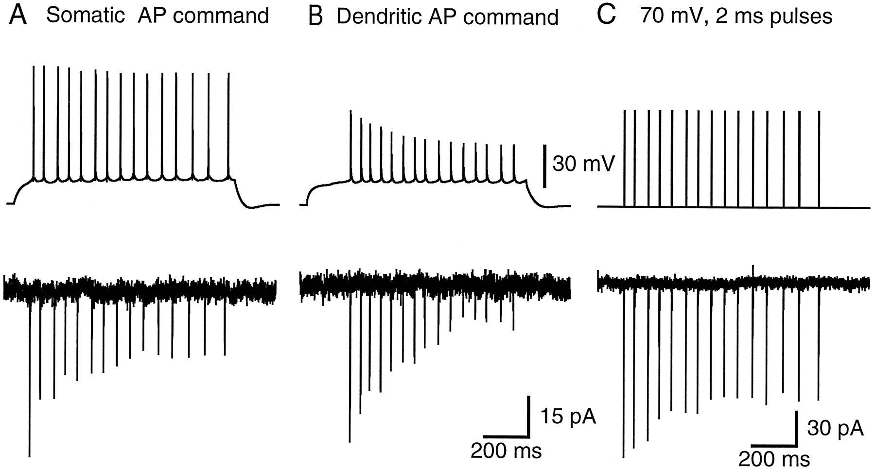 Prolonged Sodium Channel Inactivation Contributes To Dendritic The Circuit Below Along With Current Flowing And Potential Download Figure