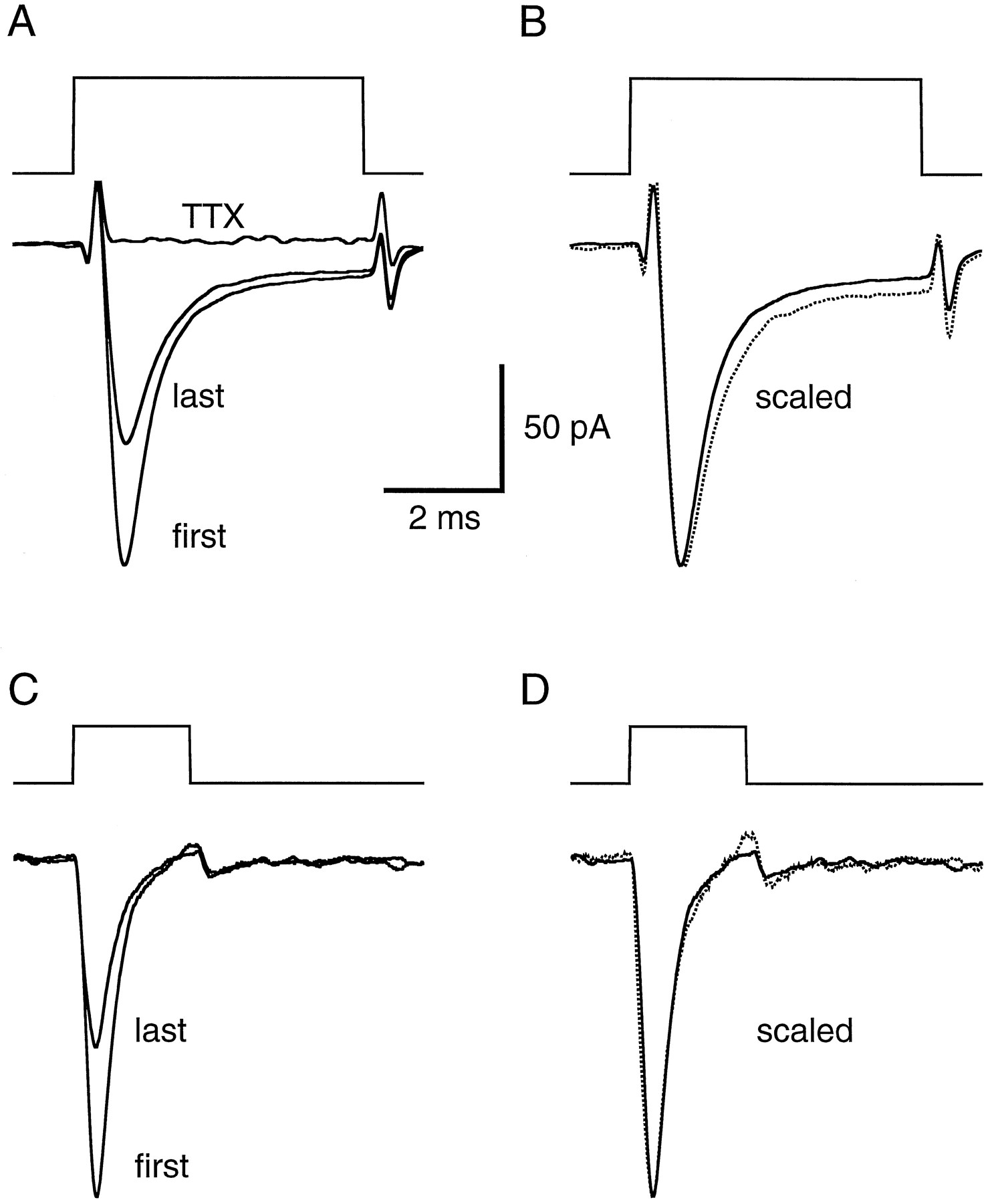 Prolonged Sodium Channel Inactivation Contributes To Dendritic Shown Below Is The Schematic For Pulse Width Monitor Download Figure