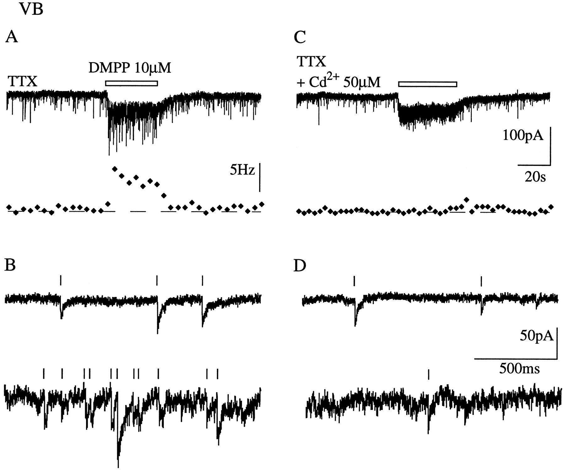 Role of Ca2+ Ions in Nicotinic Facilitation of GABA Release in Mouse