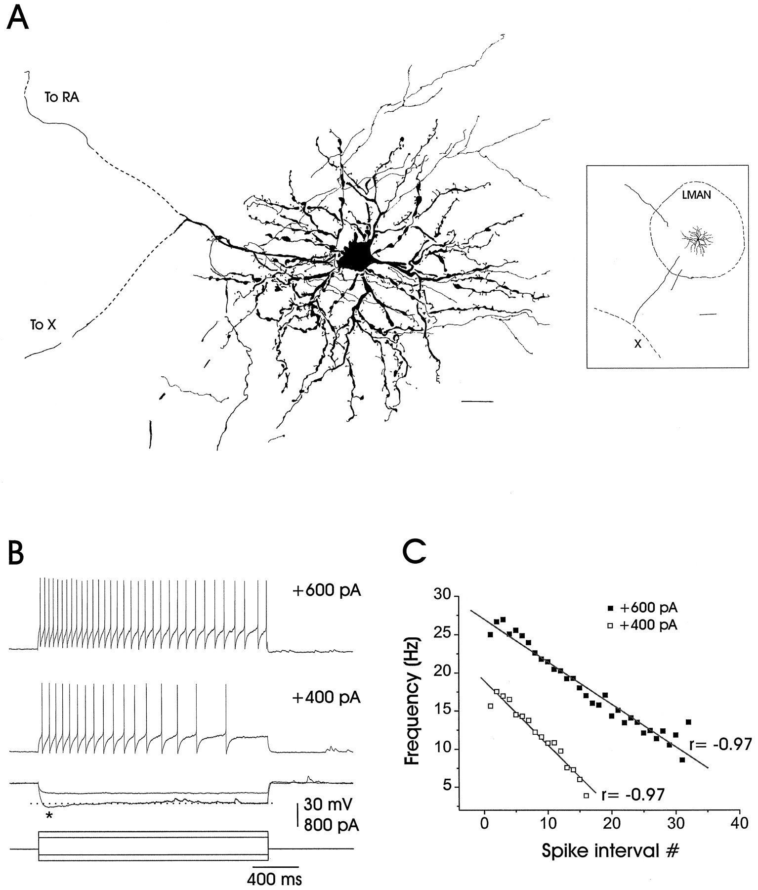 Development Of Intrinsic And Synaptic Properties In A Forebrain The Threephase Bridge Rectifier Pop Ntype Filter Circuit Is Shown As Download Figure Open New Tab