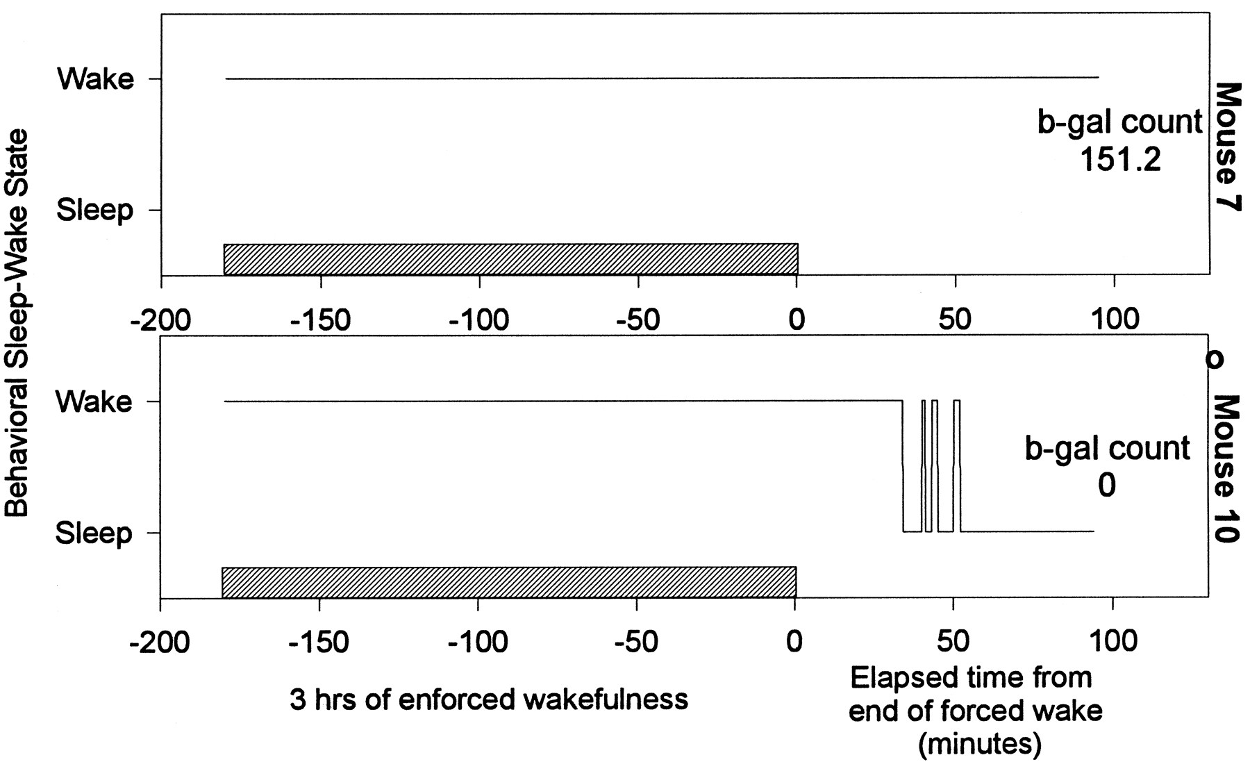Effects of Sleep on Wake-Induced c-fos Expression   Journal