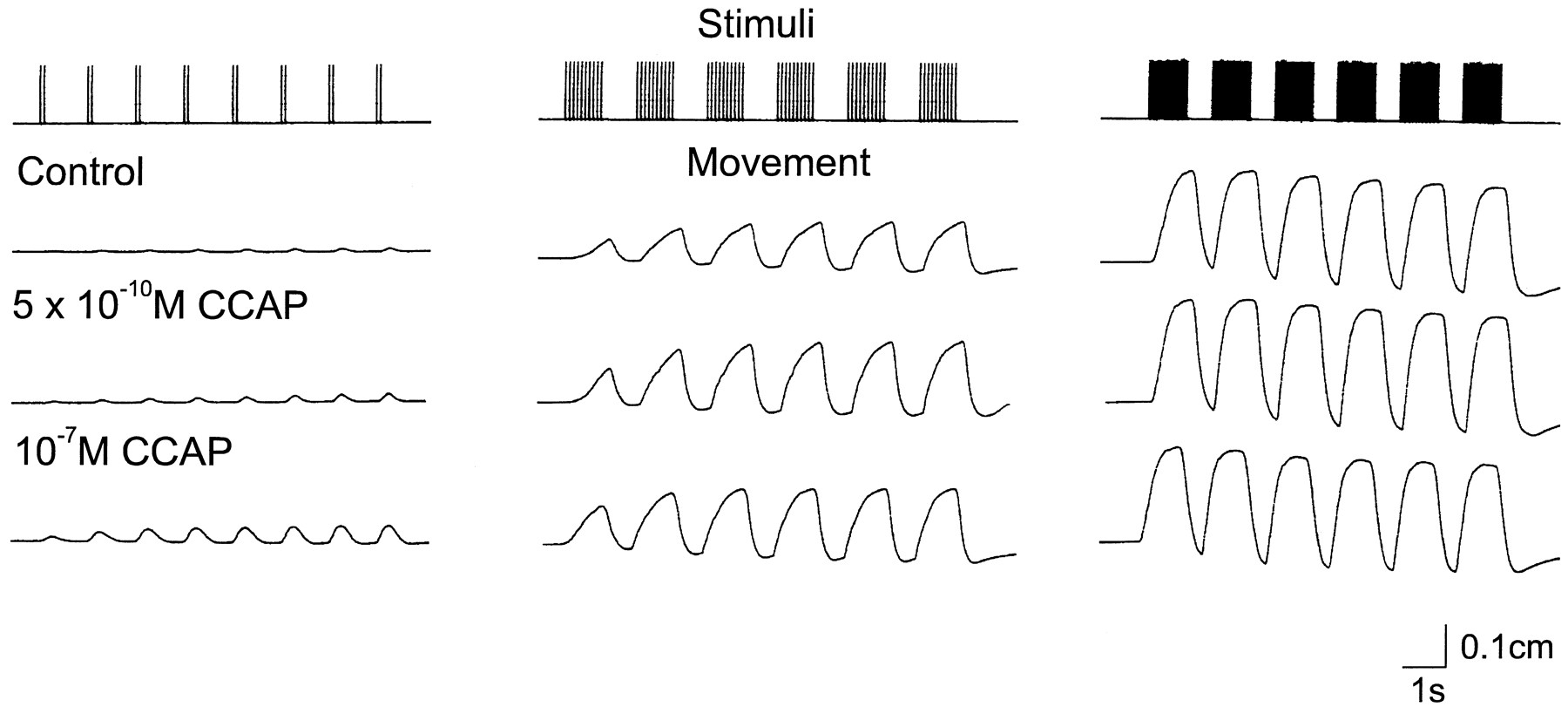 Modulation of Oscillator Interactions in the Crab Stomatogastric