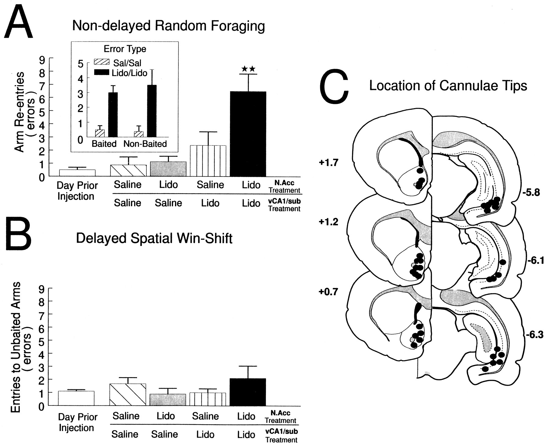 Selective Roles For Hippocampal Prefrontal Cortical And Ventral Between Unilateral Circuits Bilateral Its Functions Download Figure