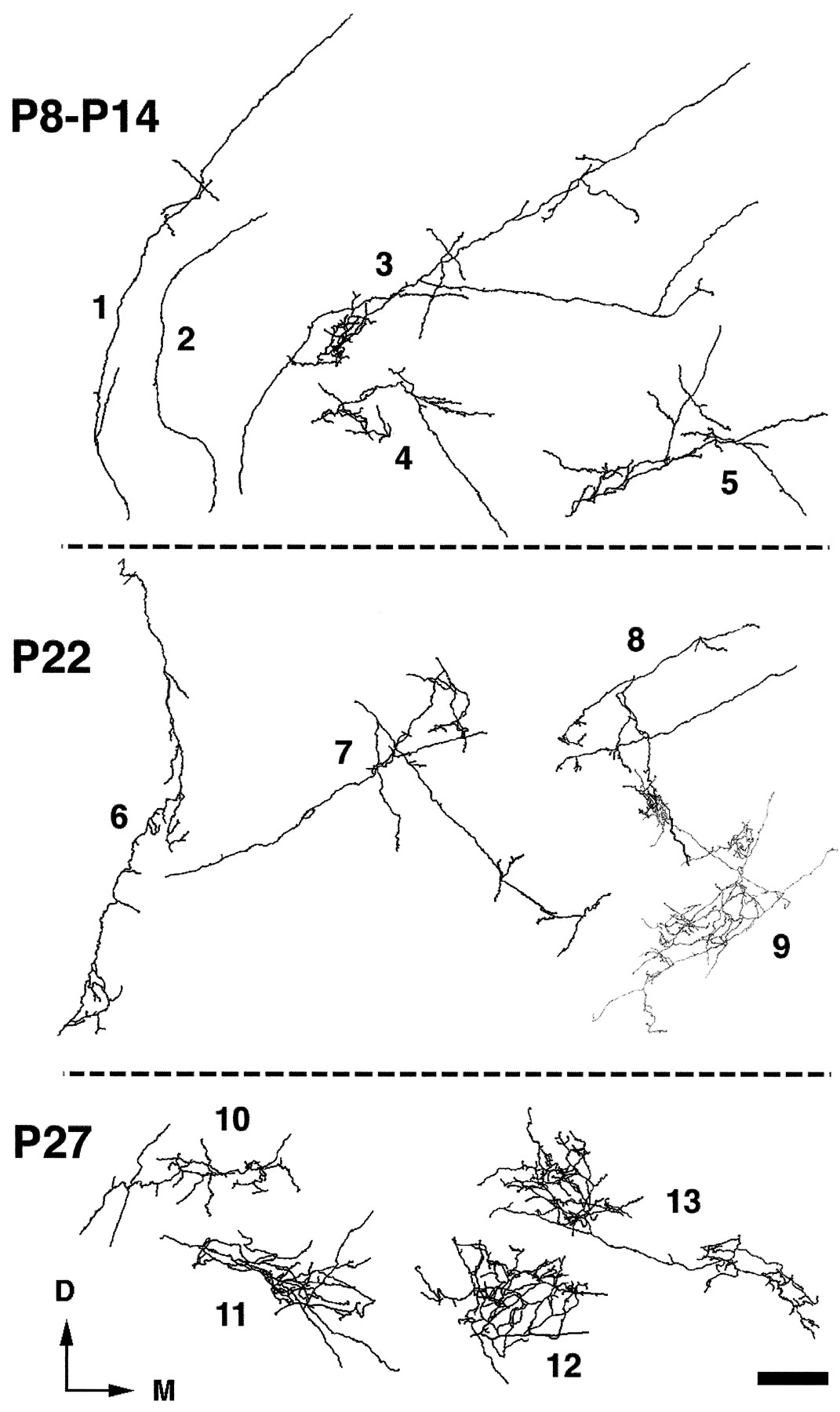 Experimentally Induced Retinal Projections to the Ferret Auditory ...