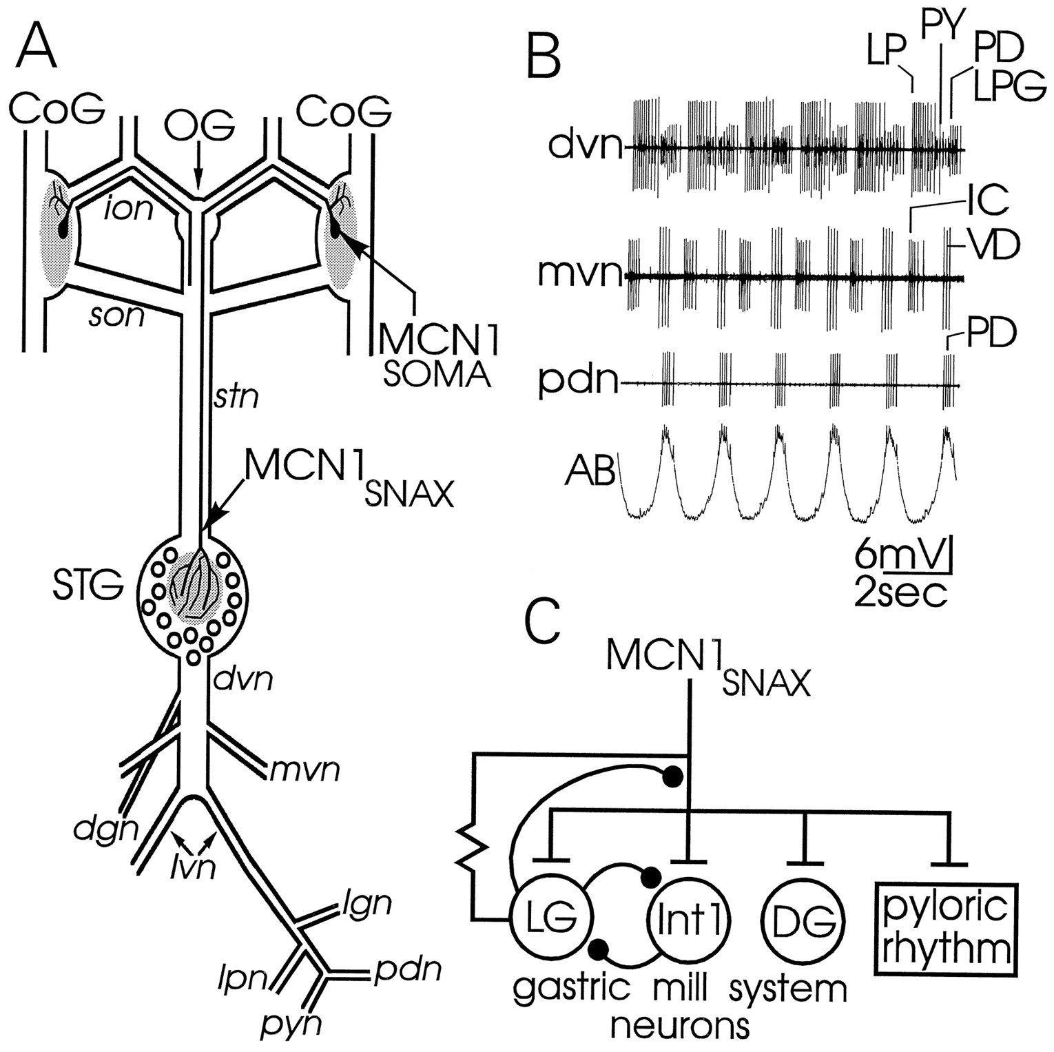 intercircuit control of motor pattern modulation by presynaptic Bar Manager Tender Resume Day download figure