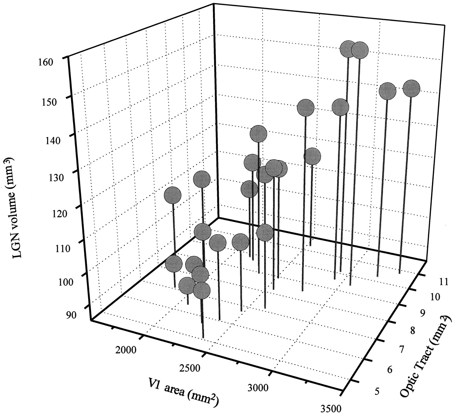 Correlated Size Variations in Human Visual Cortex, Lateral