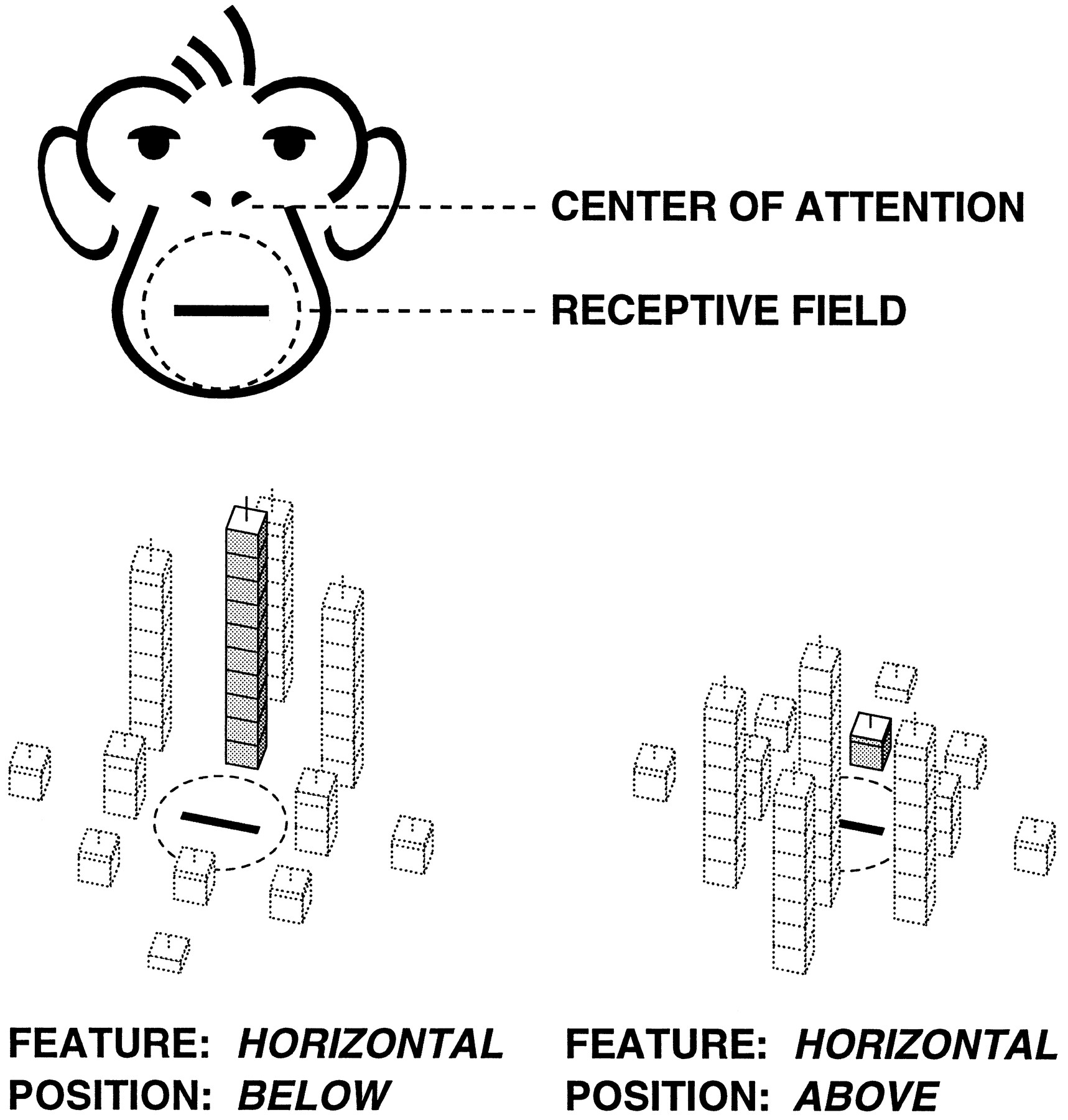 Spatial Attention Effects In Macaque Area V4 Journal Of Neuroscience