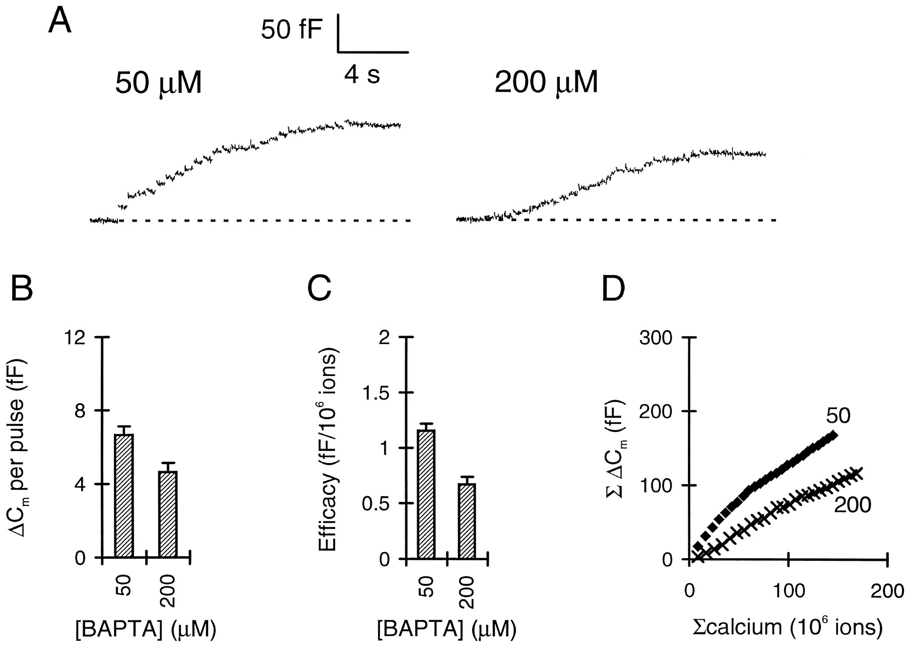 The Relation Of Exocytosis And Rapid Endocytosis To Calcium Entry