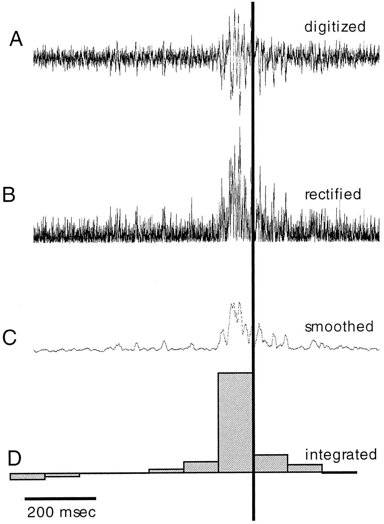 Patterns of Arm Muscle Activation Involved in Octopus