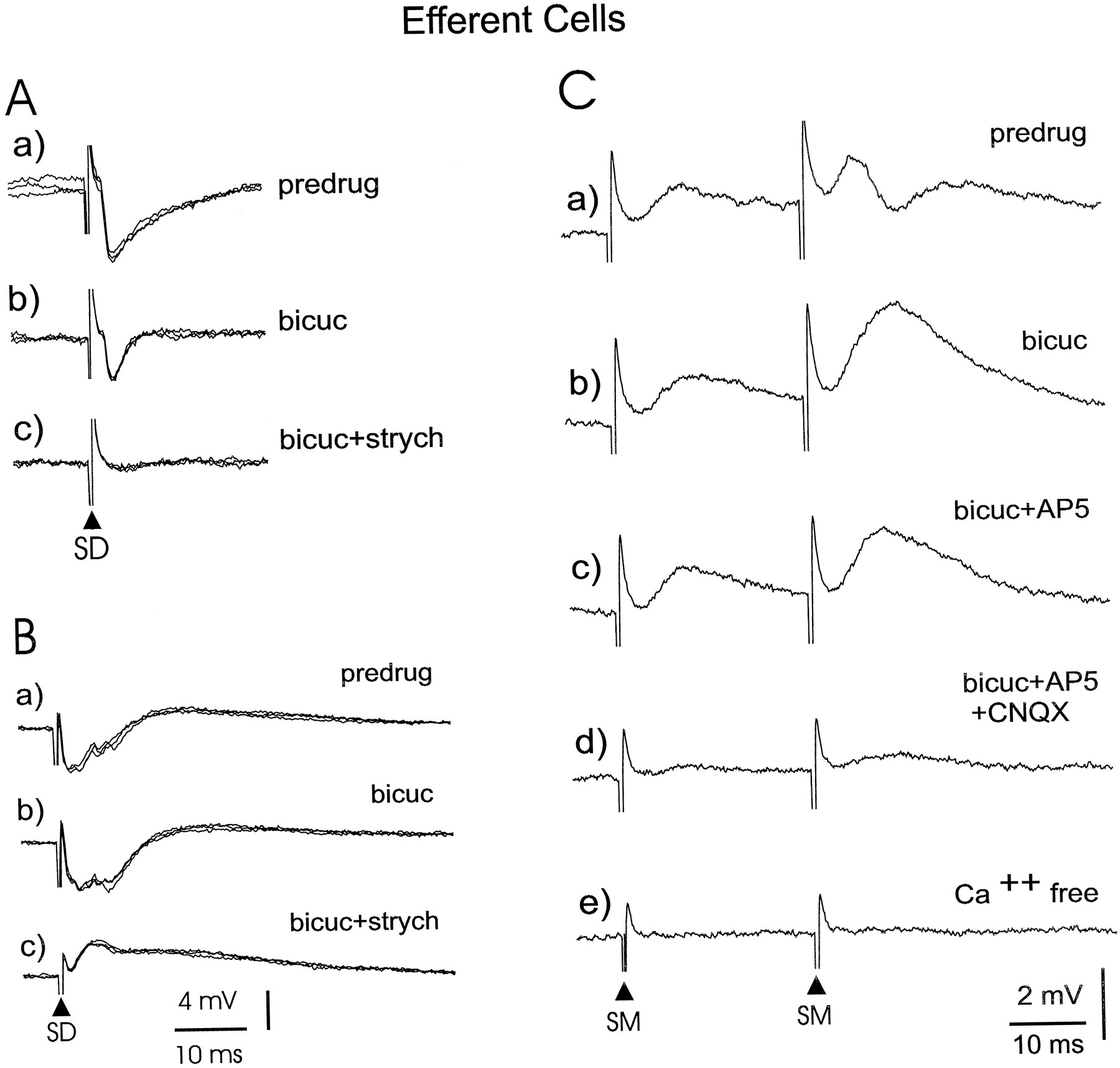 The Mormyrid Electrosensory Lobe In Vitro: Physiology and ...