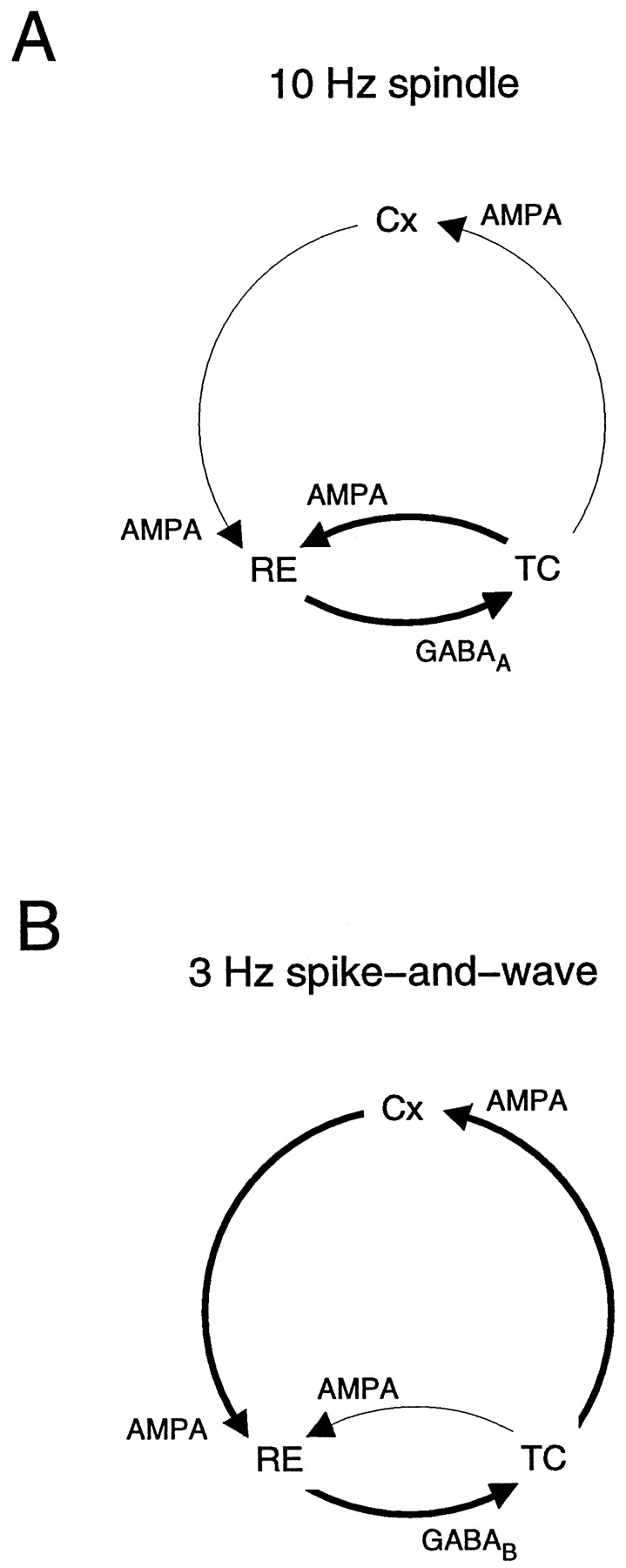 Spike-and-Wave Oscillations Based on the Properties of