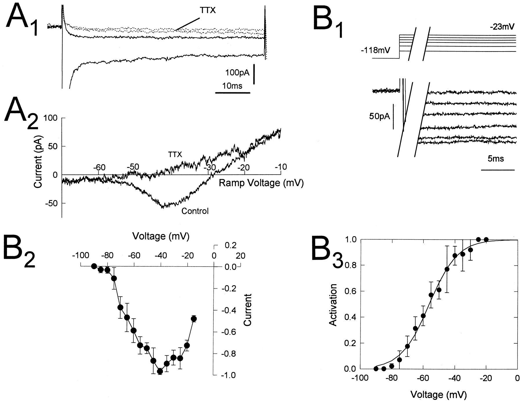 sodium current in rat and cat thalamocortical neurons role of a