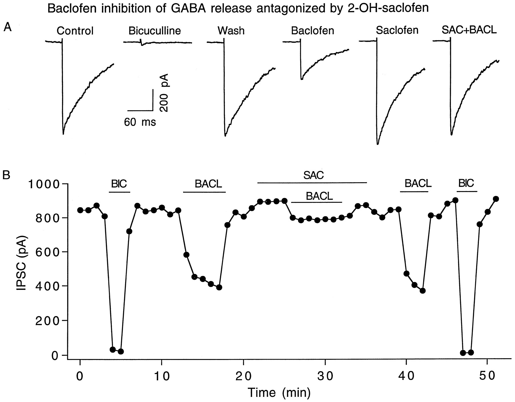 Presynaptic Gabab Autoreceptor Modulation Of P Q Type Calcium 360 Degree Feedback Report Spider Diagram Download Figure