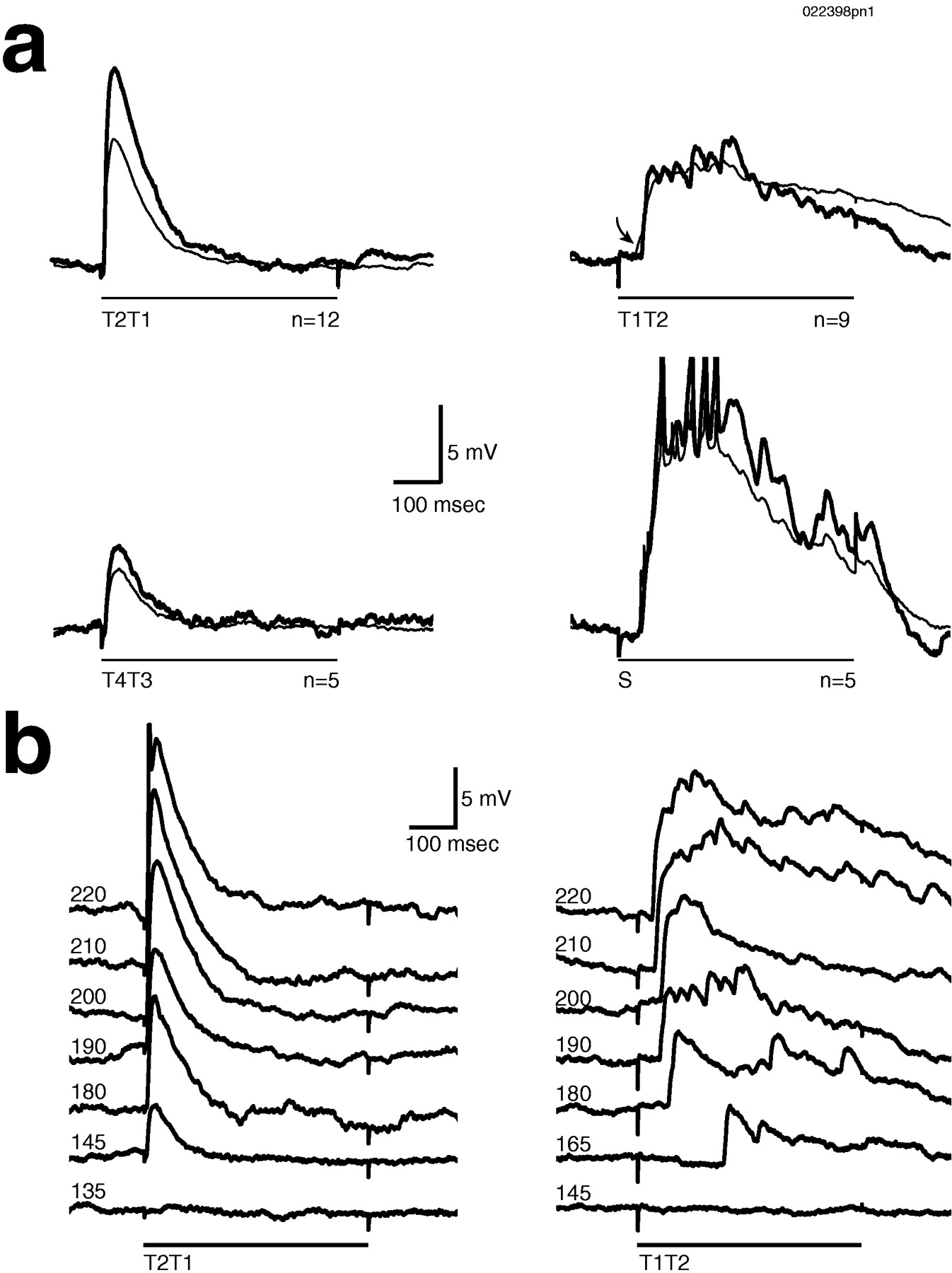 Relationship Between Afferent And Central Temporal Patterns In The 69 Thinline Wiring Diagram Download Figure
