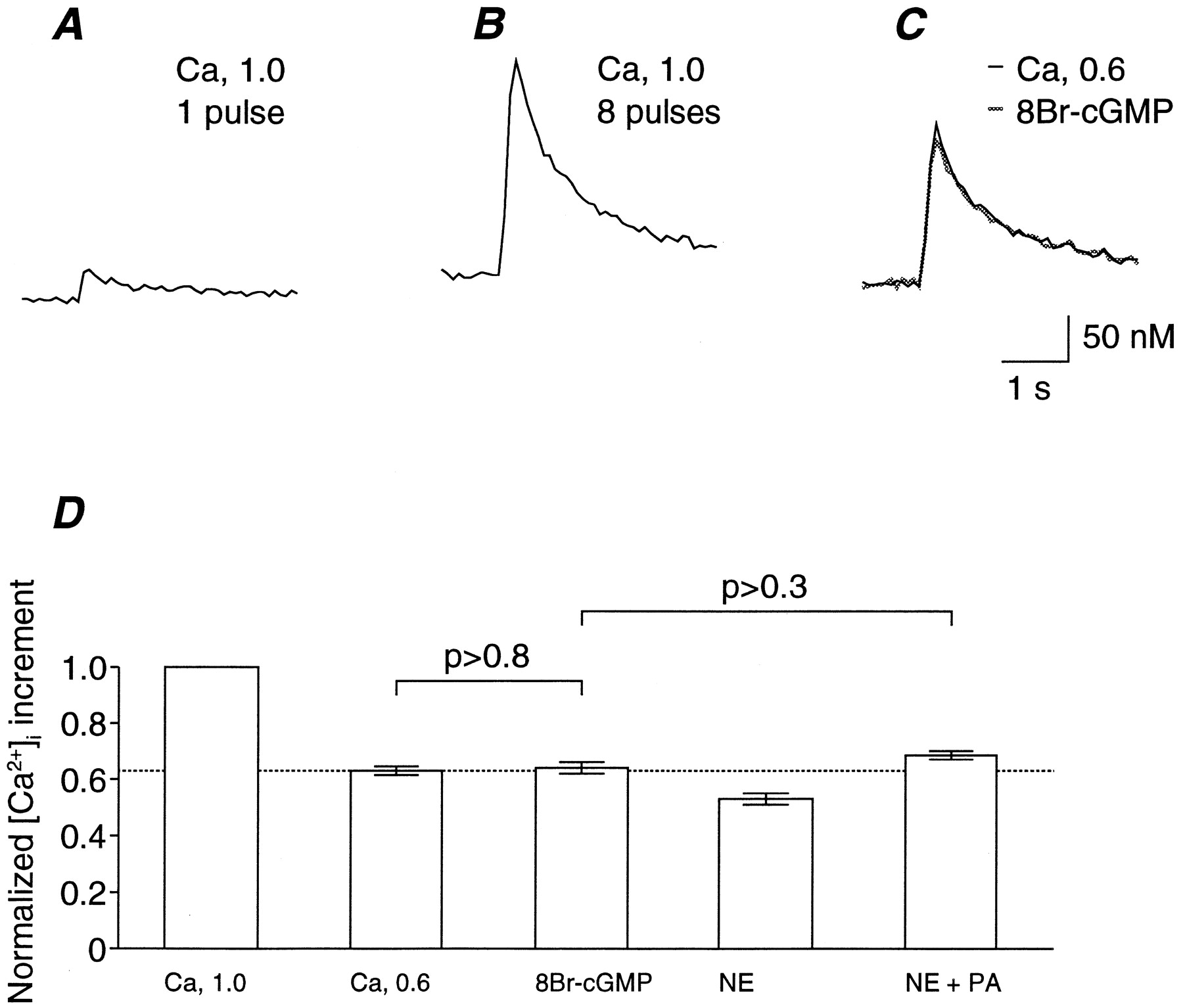 Involvement of cGMP-Dependent Protein Kinase in Adrenergic