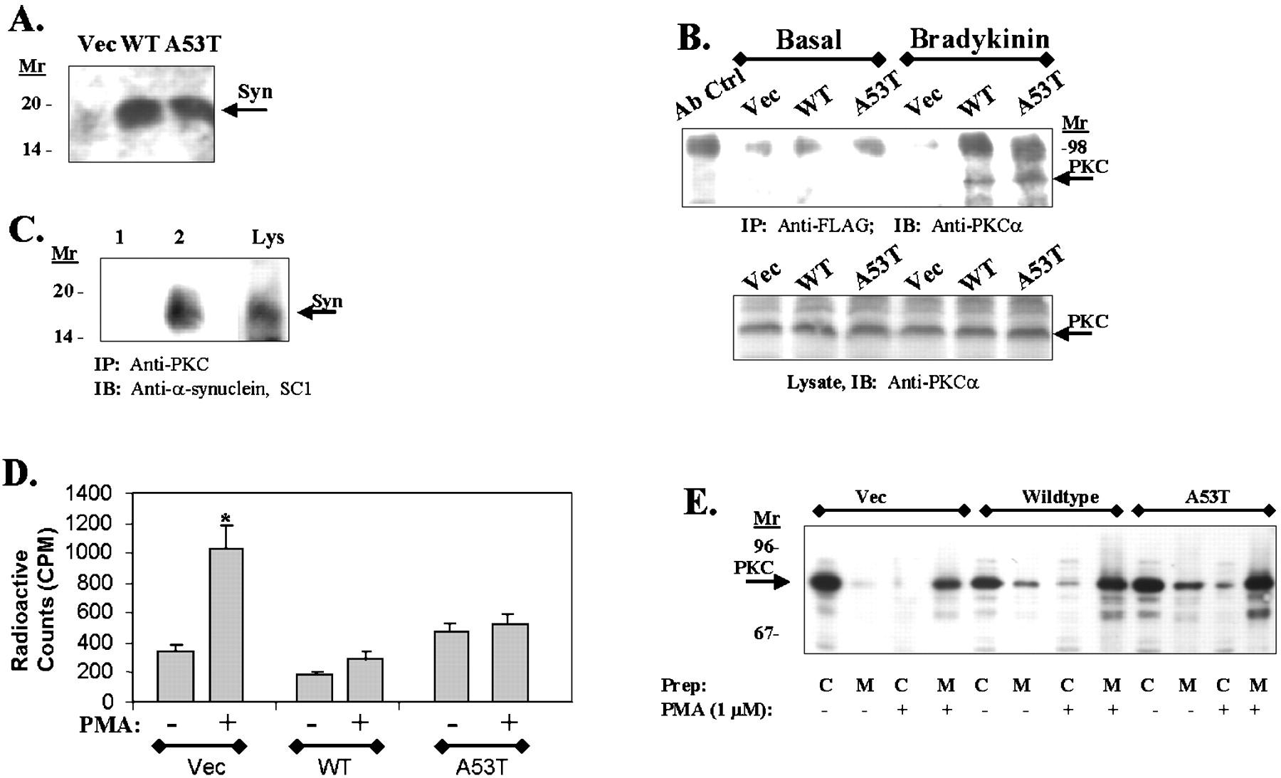 α-Synuclein Shares Physical and Functional Homology with 14