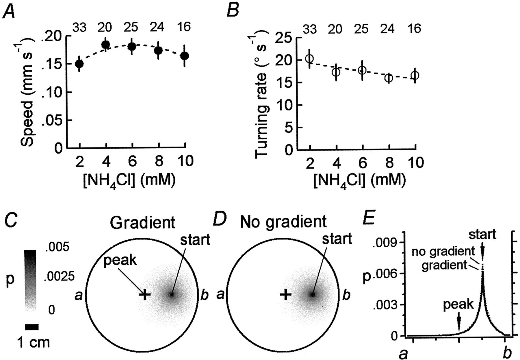 The Fundamental Role of Pirouettes in Caenorhabditis elegans