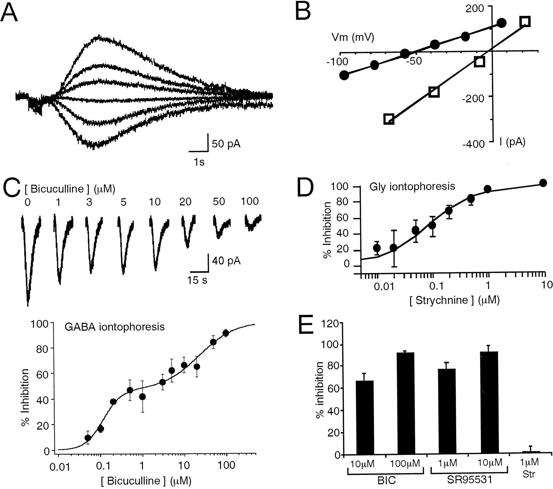 GABA Receptors Inhibited by Benzodiazepines Mediate Fast