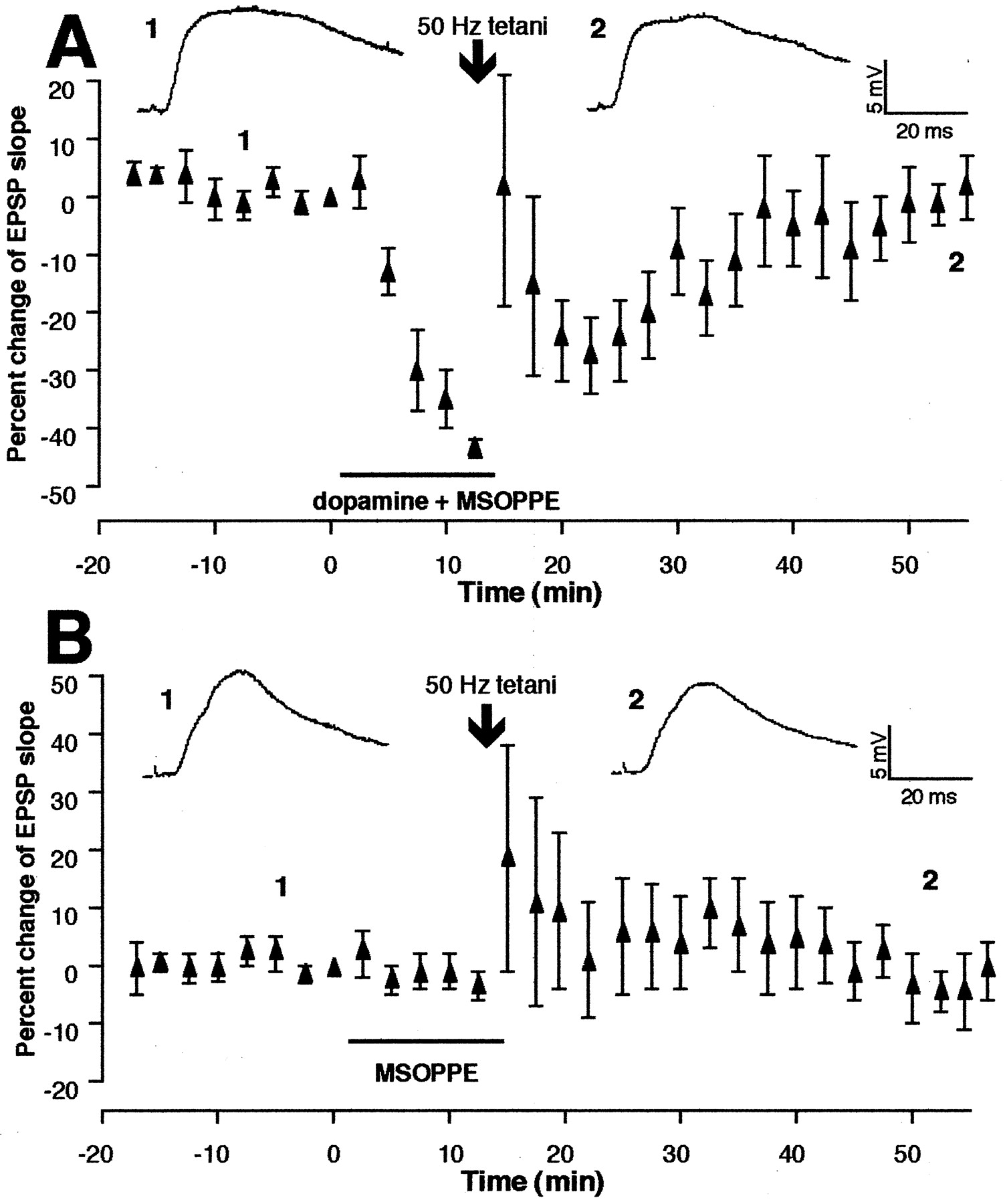 Dopamine Receptors and Groups I and II mGluRs Cooperate for Long