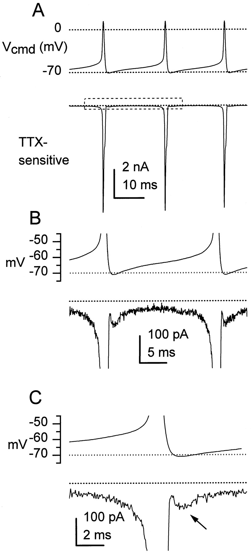 Ionic Currents Underlying Spontaneous Action Potentials in