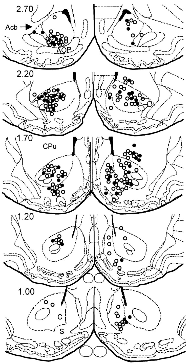 evidence that separate neural circuits in the nucleus accumbens Abscess From IV Drug Use download figure