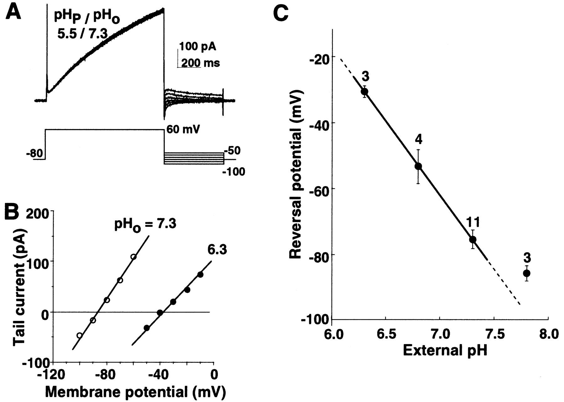 Potentiation Of A Voltage Gated Proton Current In Acidosis Induced Soft Start Mechanism For L200 Regulator Download Figure