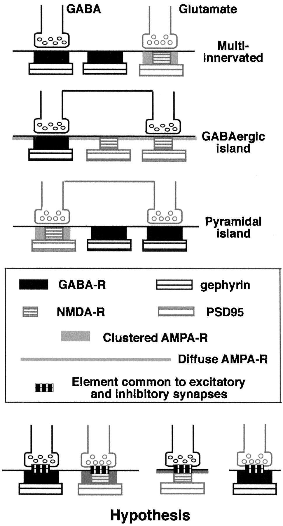 Mismatched Appositions Of Presynaptic And Postsynaptic Components In