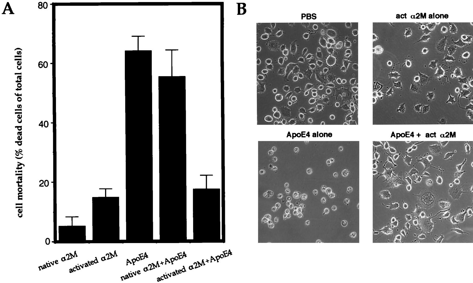 Neuronal Apoptosis by Apolipoprotein E4 through Low-Density
