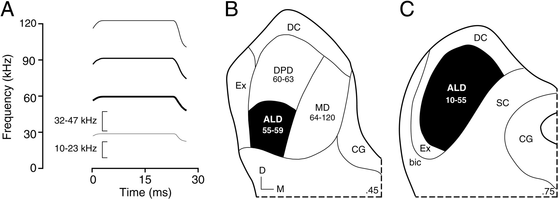 Spectral Integration in the Inferior Colliculus of the Mustached Bat ...