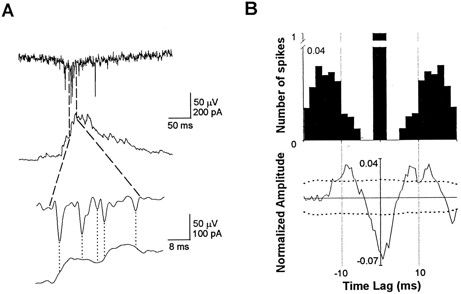 Fast Network Oscillations In The Newborn Rat Hippocampusin Vitro Teac Wiring Color Code Download Figure
