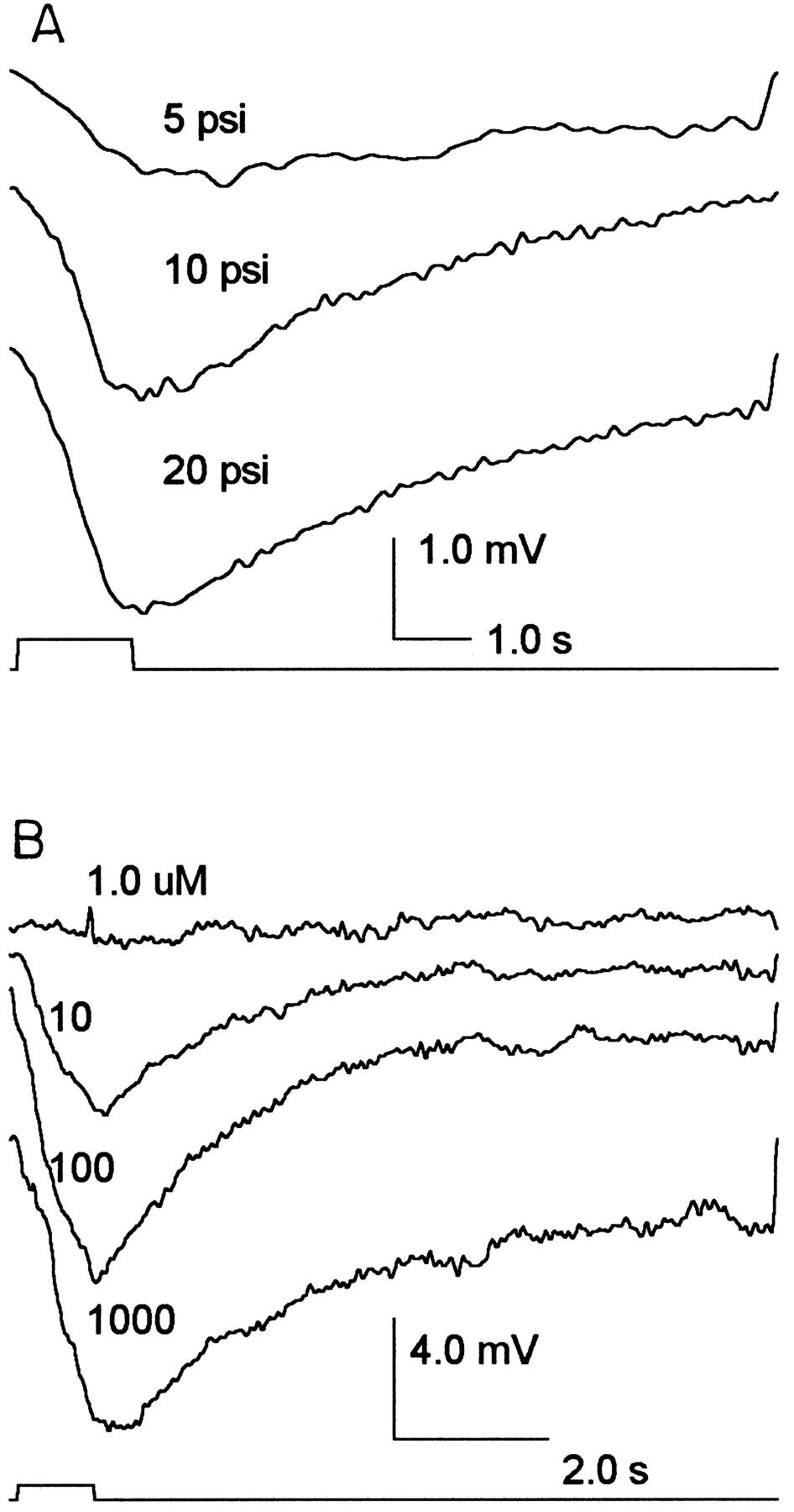 Tachykinin-Related Peptide and GABA-Mediated Presynaptic Inhibition