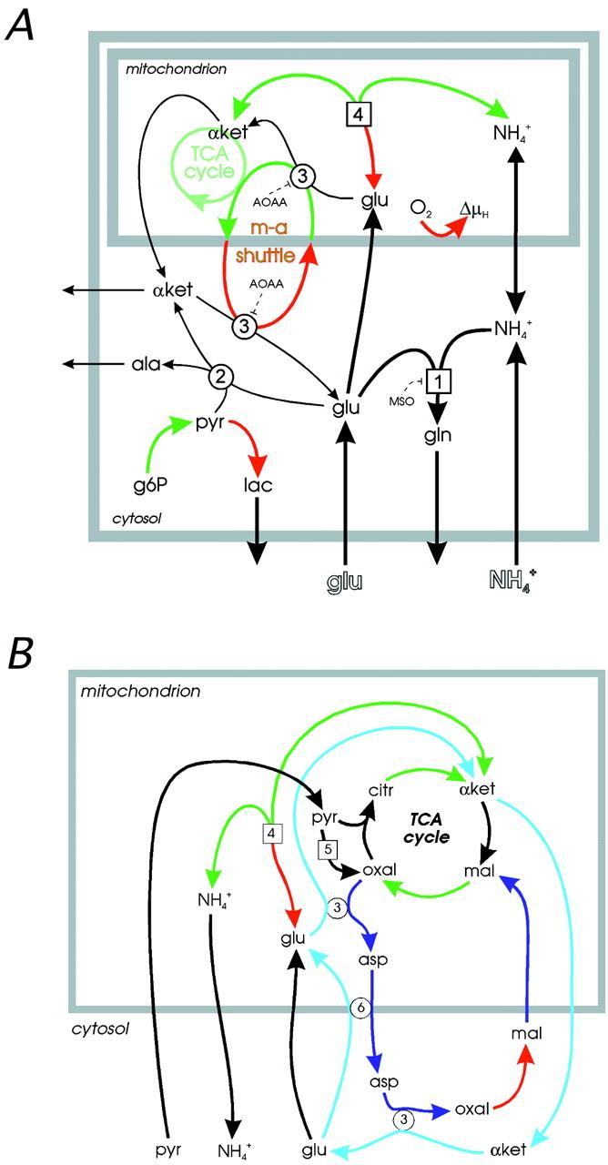 Mechanisms Of Glutamate Metabolic Signaling In Retinal Glial Mller Remington 700 Diagram Download Figure