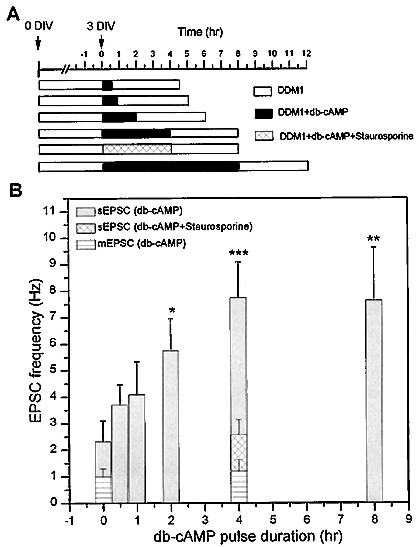 Camp Dependent Plasticity At Excitatory Cholinergic Synapses Pentium 3 Block Diagram Download Figure