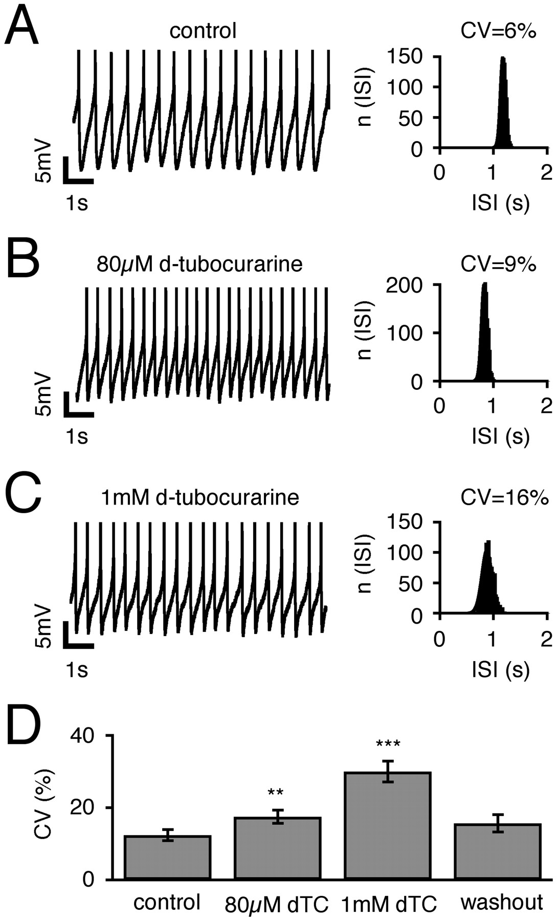 Differential Expression of the Small-Conductance, Calcium-Activated