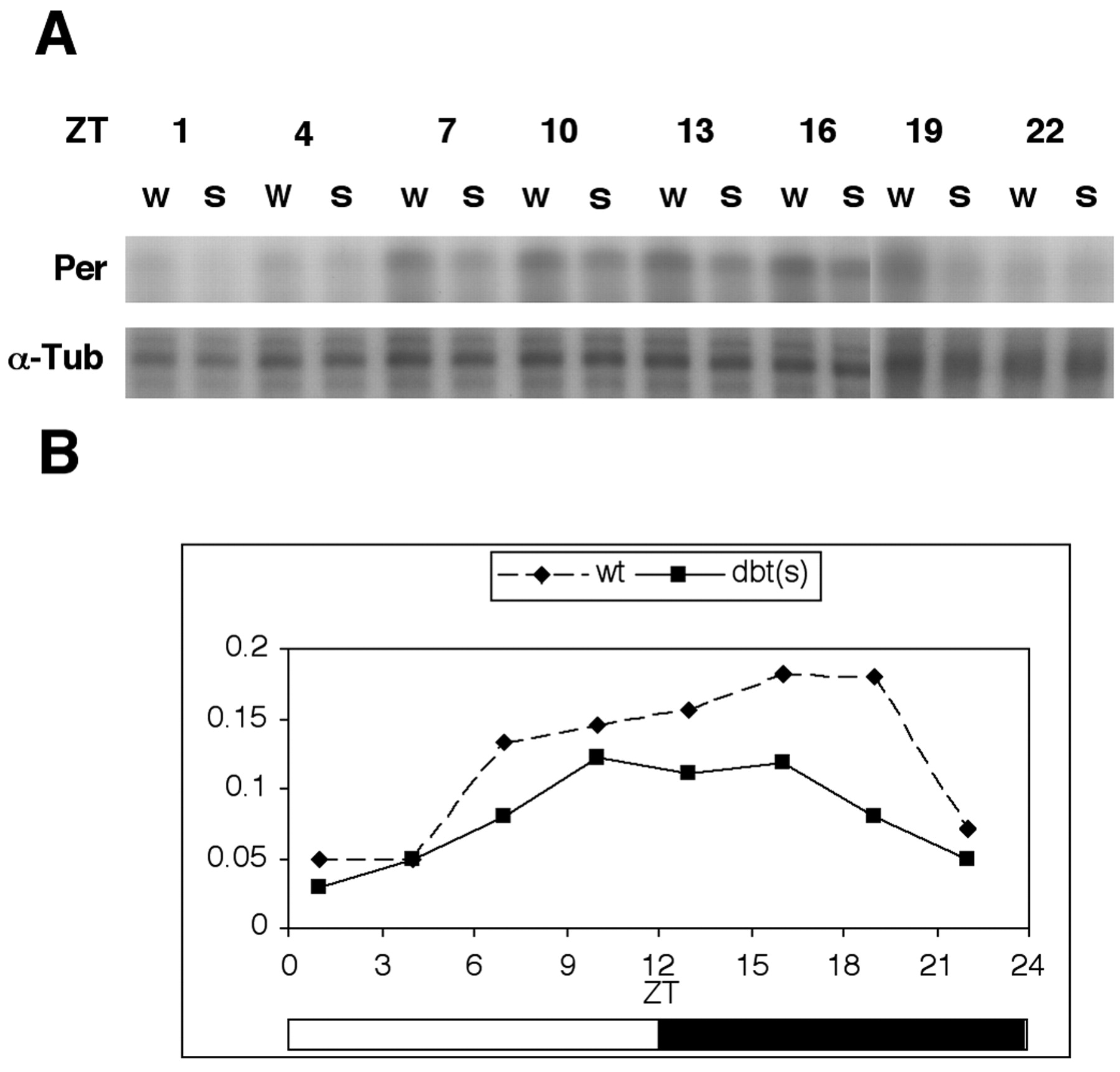 The Drosophila Double Times Mutation Delays Nuclear Accumulation Clock Pulse Generator With Cd4049 Download Figure