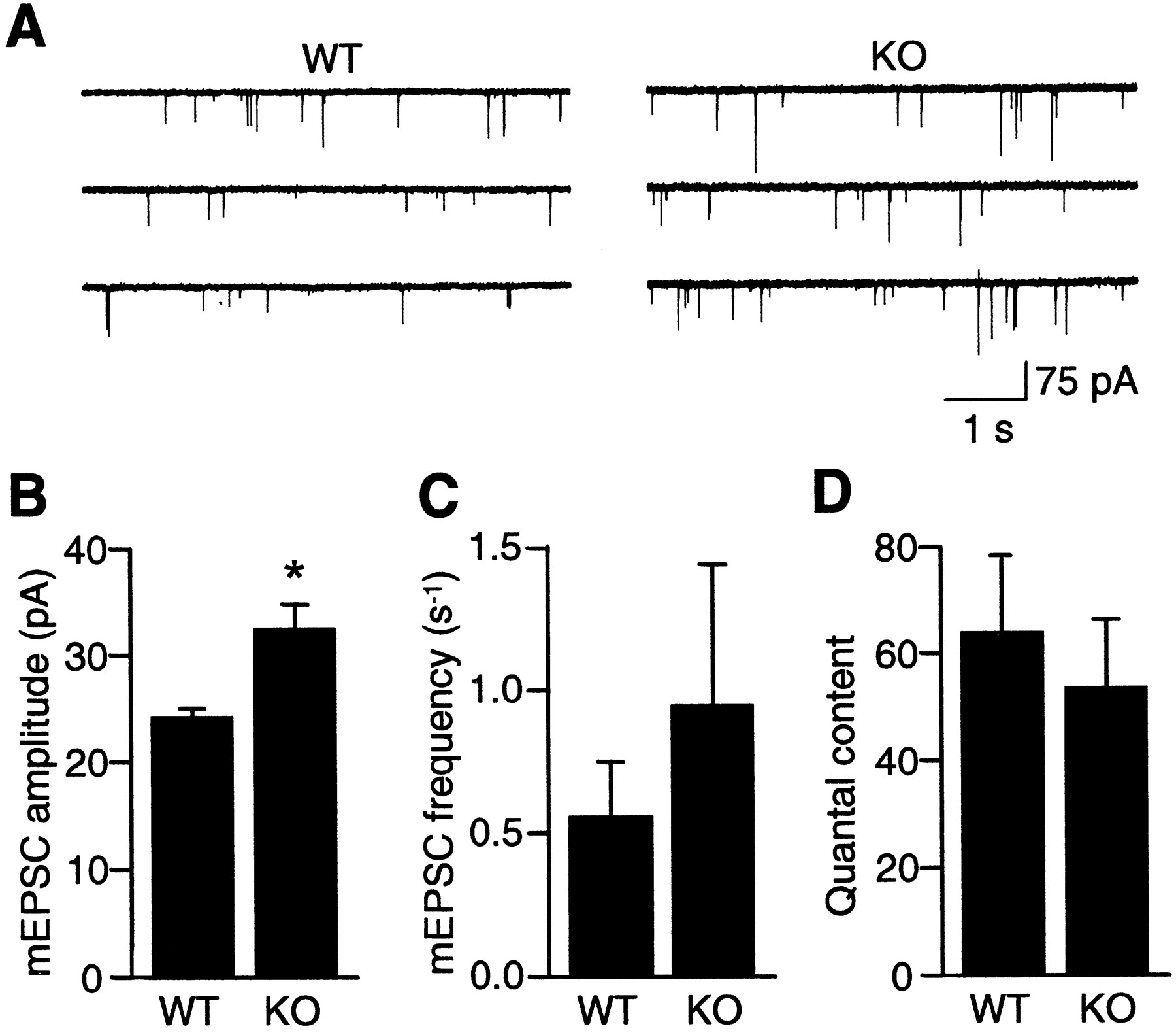 Regulation Of Neurotransmitter Release By Synapsin Iii Journal Vada Fuse Box Download Figure