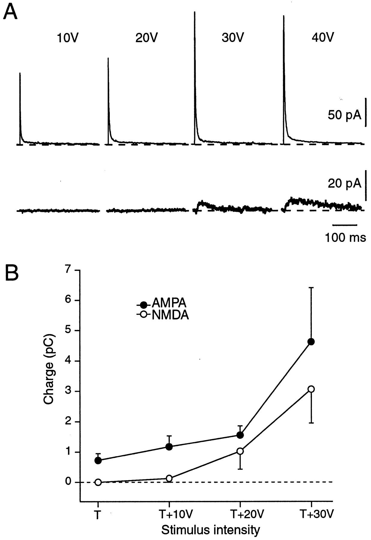 nmda receptor vs ampa