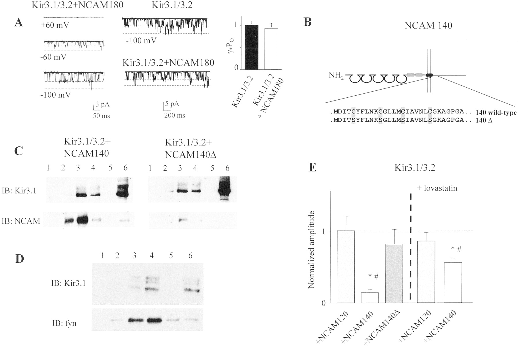 The Neural Cell Adhesion Molecule Regulates Surface Delivery Of 1996 B100 Fuse Box Diagram Download Figure