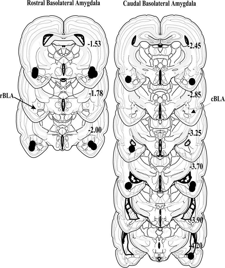 Dissociable Effects Of Lidocaine Inactivation Of The Rostral And