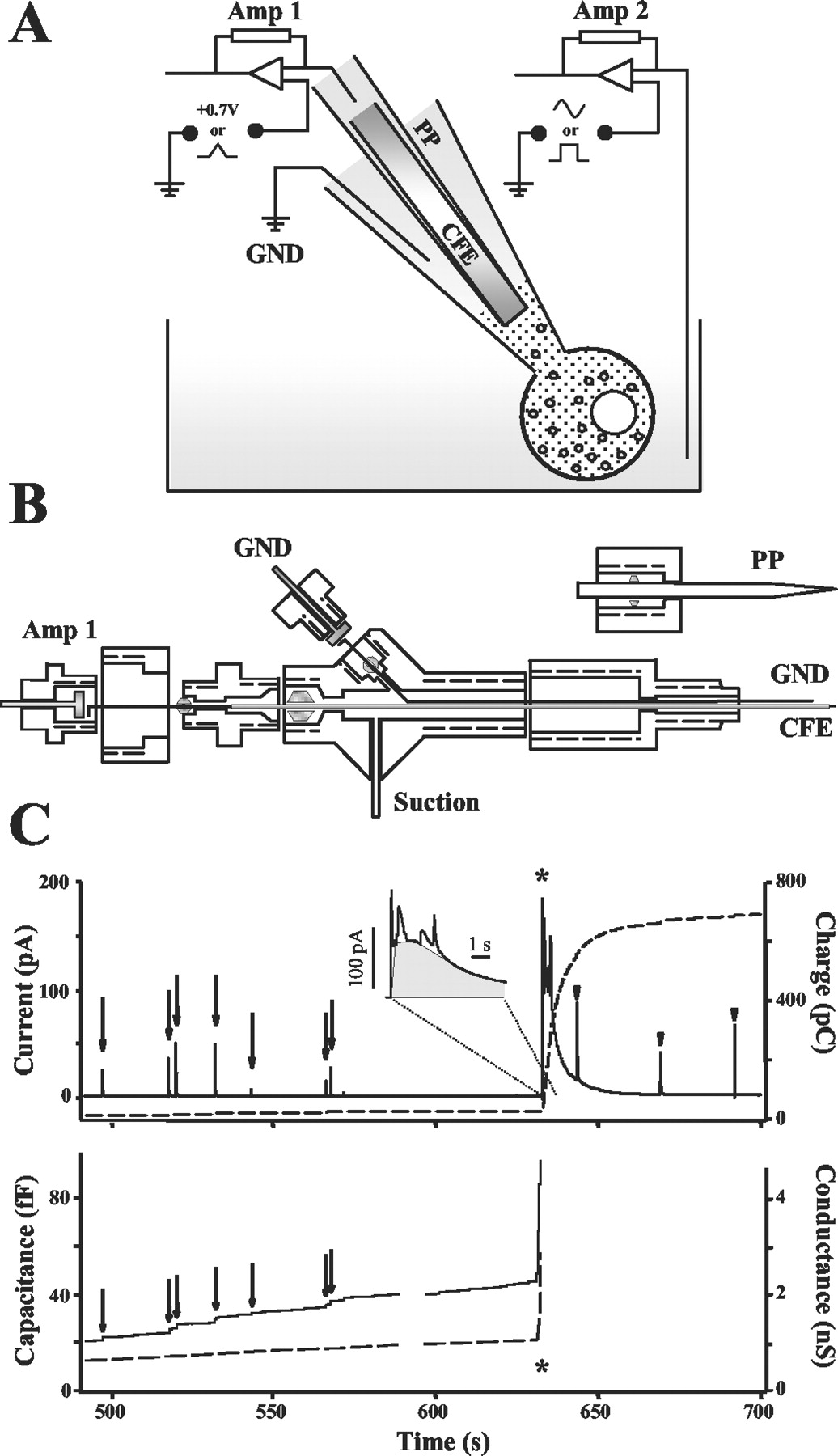 Intracellular Patch Electrochemistry Regulation Of Cytosolic Diagram For Wiring 8 Pin Nr 51 Download Figure