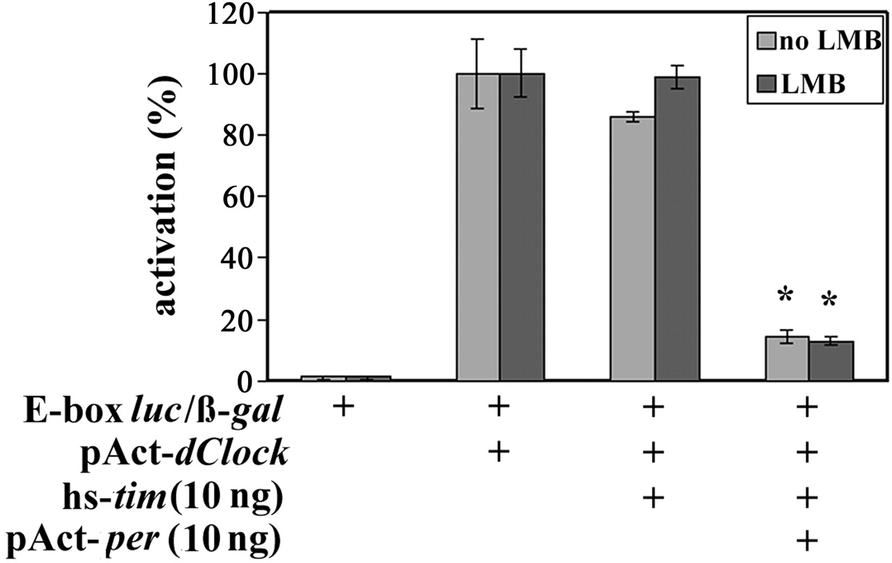 Novel Insights Into The Regulation Of Timeless Protein Journal Clock Pulse Generator With Cd4049 Download Figure